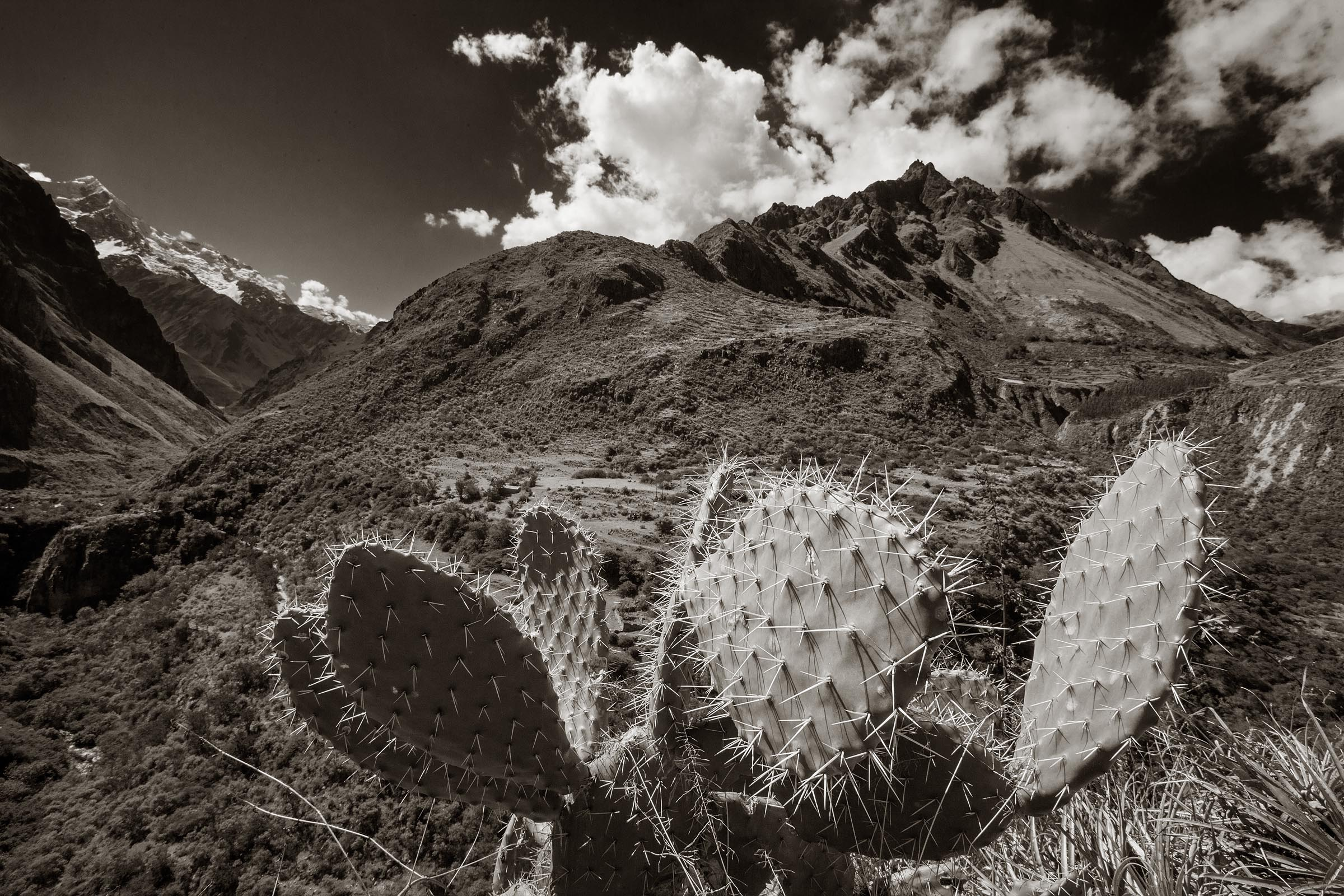 The terrain and climate along this 45 kilometer portion of the Inca Trail changes dramatically and quickly. At the lower elevations the climate is more arid providing the right environment for desert plants such as this cactus.