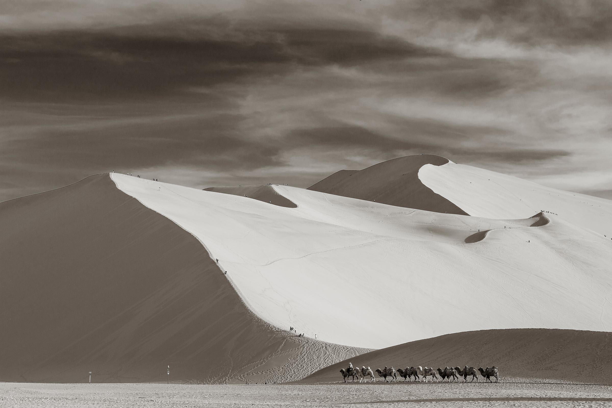 A camel caravan passes in front of the large sand dunes in Donhuan, China.