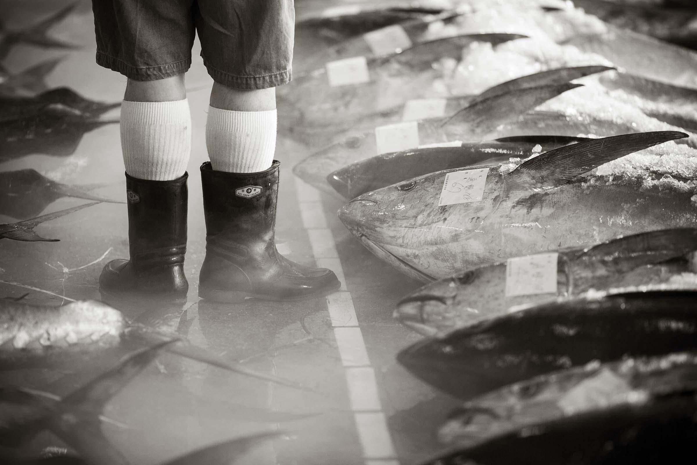 Fish Market at Nanfang Ao