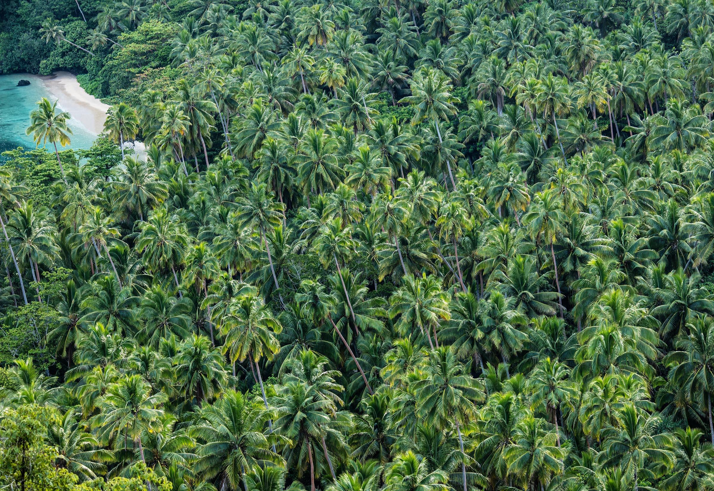 Journey to Paradise : Laucala Island, Fiji