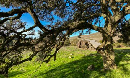 Napa Valley Photographer
